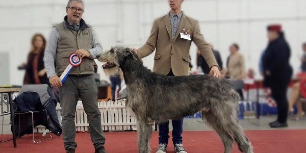 CAC ZAGREB SPECIALTY FOR SIGHTHOUNDS Tommy dei Mangialupi CAC BOB Will Scarlet dei Mangialupi CAC