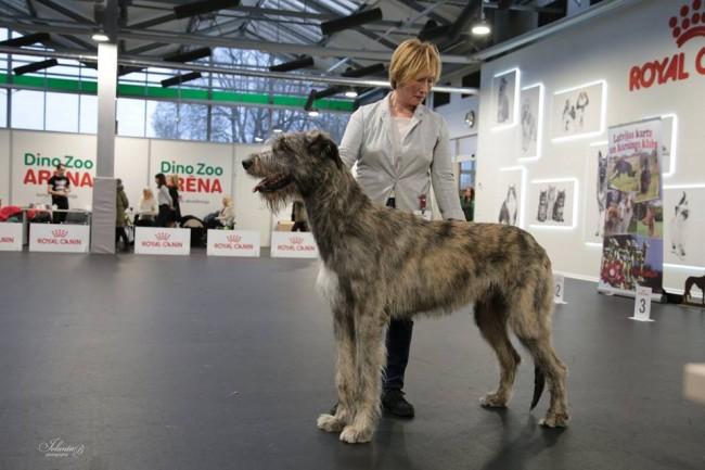 Club Specialty Show Riga Latvia Dwarfs'Valley Pascal won 1 excellent in junior class and BOO