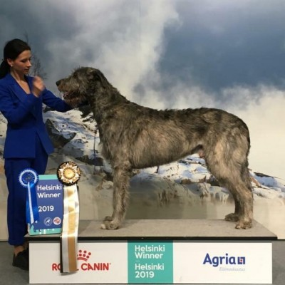 Dog-show  Helsinki Finland Dwarfs Valley Pascal became   new Finnish Champion