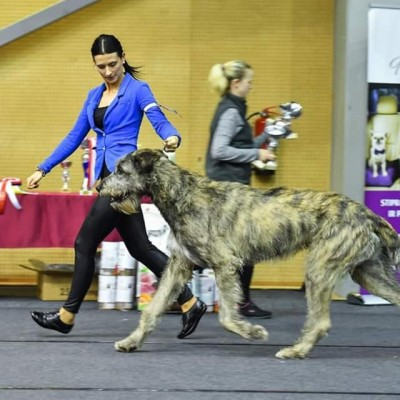 Double Winter National Dog Show Liepaja, Latvia Dwarfs Valley Pascal BOB BIG 3