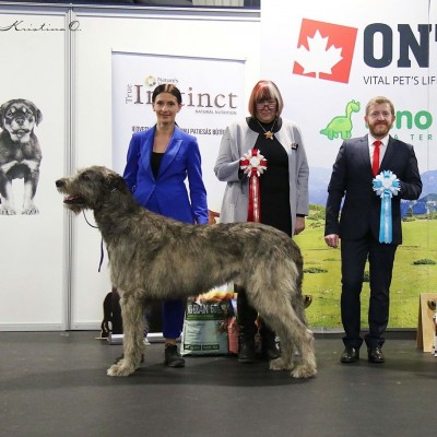 Dwarfs' Valley  Pascal  BEST IN SHOW at the Latvian Sighthound Specialty