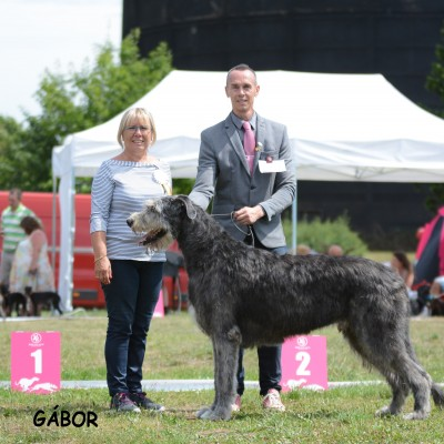 F.C.I. Euro Sighthound 2017 in Czech Republic  - Will Scarlet & Tommy dei Mangialupi