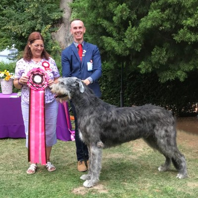 FCI Central European Sighthound Show & Sighthound Club Show 2017 Will Scarlet got the titles both days