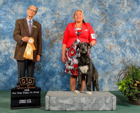 Forest City Kennel Dog Show -  Canada  May,12 Three Little Birds Grooving To The Music – aka Gypsy   15 weeks old  wins Best Baby Puppy in Group