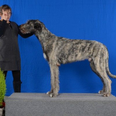 Georgina Dog Show Canada 2018  Castlekeep Steel Will  Best puppy