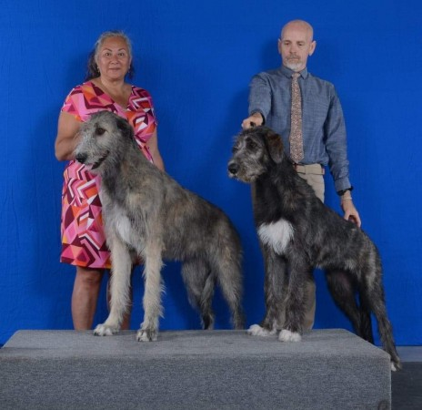 Hamiltion Dog Show Friday  Canada Three Little Birds Grooving To The Music got Best puppy in group  2 days