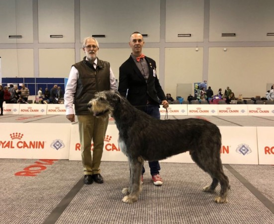 IDS Padova 2018 Sighthound Specialty - Will Scarlet got Best Of Breed