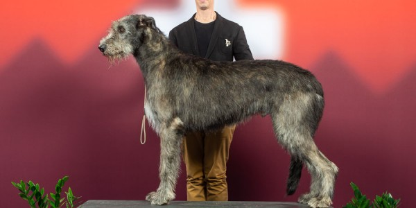 International Dog Show Geneva 2018  - II  Charles dei MAngialupi BOG 1st