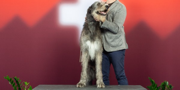 International Dog Show Geneva 2018  - III Charles dei MAngialupi BOB