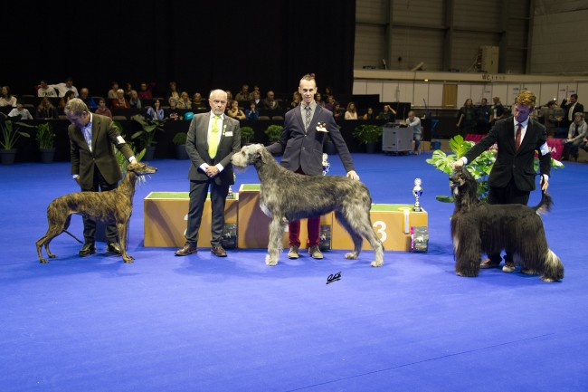 International Dog Show  Genève (CH) Tommy dei Mangialupi  Best in Group