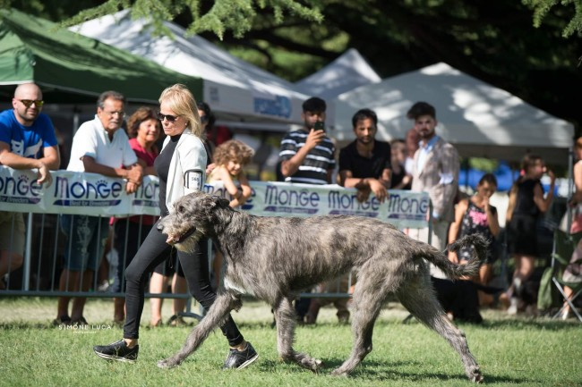 International Dog Show Gradisca d'Isonzo (GO) 13-14 August