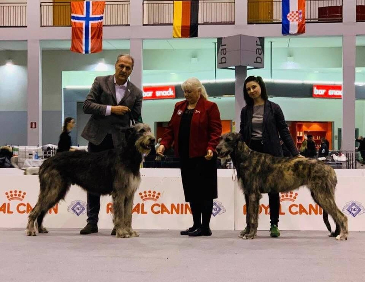 International Dog Show Padova - Sighthound Specialty Jan, 13