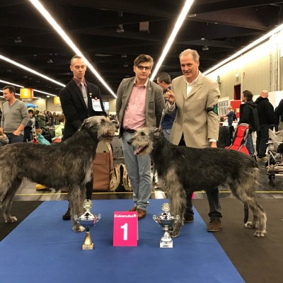 Nürnberg CAC show Will Scarlet is now German VDH champion  Tommy German VDH and DWZRV champion