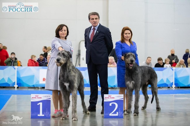 """President's Cup of RKF"" AND International Dog Show ""Russia 2018"" Dwars' Valley Perkons  got excellent results"