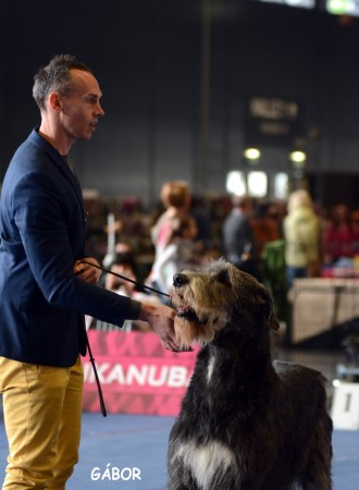 Salzburg International Dog show Will Scarlet completed the Austrian Championship