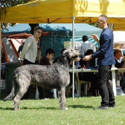 Sighthound club speciality at Padenghe Del Garda Italy -Springtime Club Show with CAC