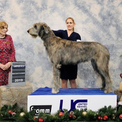 United Kennel Club Limited Breed Show   Number 1 Irish Wolfhound Puppy in Canada Gypsy  - Three Little Birds' Grooving ToThe Music